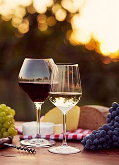 Willkommen beim Weinstudio Austria